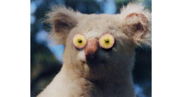 Flower Eye Koala