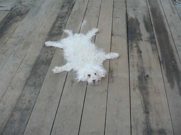 Dog carpets